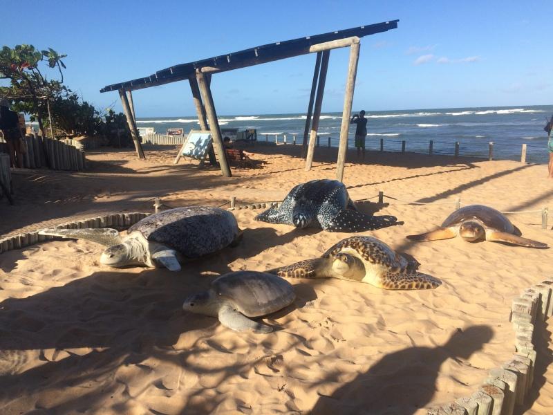 Projeto Tamar na Praia do Forte bahia